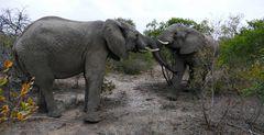 Foto- und Erlebnisreise -Südafrikas Tierwelt- Impression 010