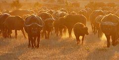Foto- und Erlebnisreise -Südafrikas Tierwelt- Impression 011