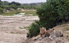 Foto- und Erlebnisreise -Südafrikas Tierwelt- Impression 013