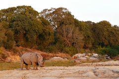 Foto- und Erlebnisreise -Südafrikas Tierwelt- Impression 014