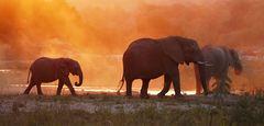 Foto- und Erlebnisreise -Südafrikas Tierwelt- Impression 015