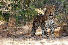 Foto- und Erlebnisreise -Südafrikas Tierwelt- Impression 017