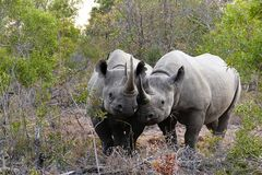 Foto- und Erlebnisreise -Südafrikas Tierwelt- Impression 018