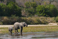 Foto- und Erlebnisreise -Südafrikas Tierwelt- Impression 019