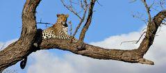 Foto- und Erlebnisreise -Südafrikas Tierwelt- Impression 020
