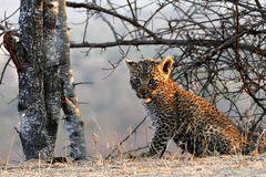 Foto- und Erlebnisreise -Südafrikas Tierwelt- Impression 022