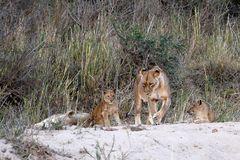 Foto- und Erlebnisreise -Südafrikas Tierwelt- Impression 023