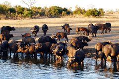 Foto- und Erlebnisreise -Südafrikas Tierwelt- Impression 024
