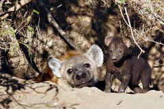 Foto- und Erlebnisreise -Südafrikas Tierwelt- Impression 026