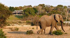 Foto- und Erlebnisreise -Südafrikas Tierwelt- Impression 027