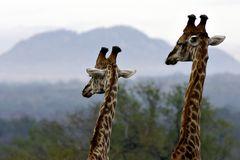 Foto- und Erlebnisreise -Südafrikas Tierwelt- Impression 028