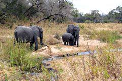 Foto- und Erlebnisreise -Südafrikas Tierwelt- Impression 029