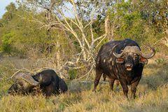 Foto- und Erlebnisreise -Südafrikas Tierwelt- Impression 030