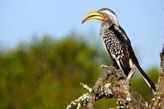 Foto- und Erlebnisreise -Südafrikas Tierwelt- Impression 032