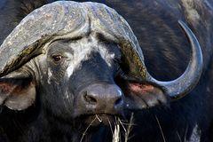Foto- und Erlebnisreise -Südafrikas Tierwelt- Impression 033