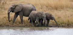 Foto- und Erlebnisreise -Südafrikas Tierwelt- Impression 034