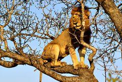 Foto- und Erlebnisreise -Südafrikas Tierwelt- Impression 035