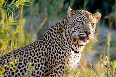 Foto- und Erlebnisreise -Südafrikas Tierwelt- Impression 036
