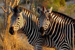 Foto- und Erlebnisreise -Südafrikas Tierwelt- Impression 037