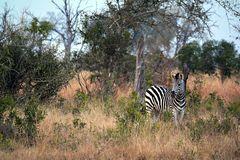 Foto- und Erlebnisreise -Südafrikas Tierwelt- Impression 038
