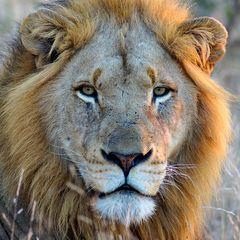 Foto- und Erlebnisreise -Südafrikas Tierwelt- Impression 039