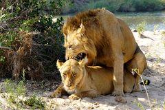 Foto- und Erlebnisreise -Südafrikas Tierwelt- Impression 040