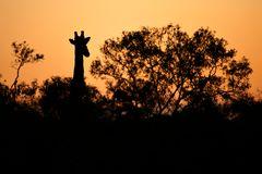 Foto- und Erlebnisreise -Südafrikas Tierwelt- Impression 041
