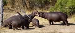 Foto- und Erlebnisreise -Südafrikas Tierwelt- Impression 043