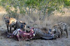 Foto- und Erlebnisreise -Südafrikas Tierwelt- Impression 044