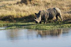Foto- und Erlebnisreise -Südafrikas Tierwelt- Impression 045