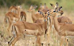 Foto- und Erlebnisreise -Südafrikas Tierwelt- Impression 046