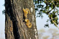 Foto- und Erlebnisreise -Südafrikas Tierwelt- Impression 047