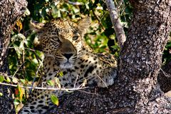 Foto- und Erlebnisreise -Südafrikas Tierwelt- Impression 048