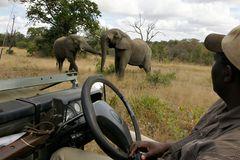 Foto- und Erlebnisreise -Südafrikas Tierwelt- Impression 049