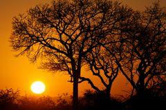 Foto- und Erlebnisreise -Südafrikas Tierwelt- Impression 051