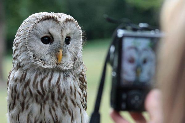 Foto-Workshop Tierfotografie
