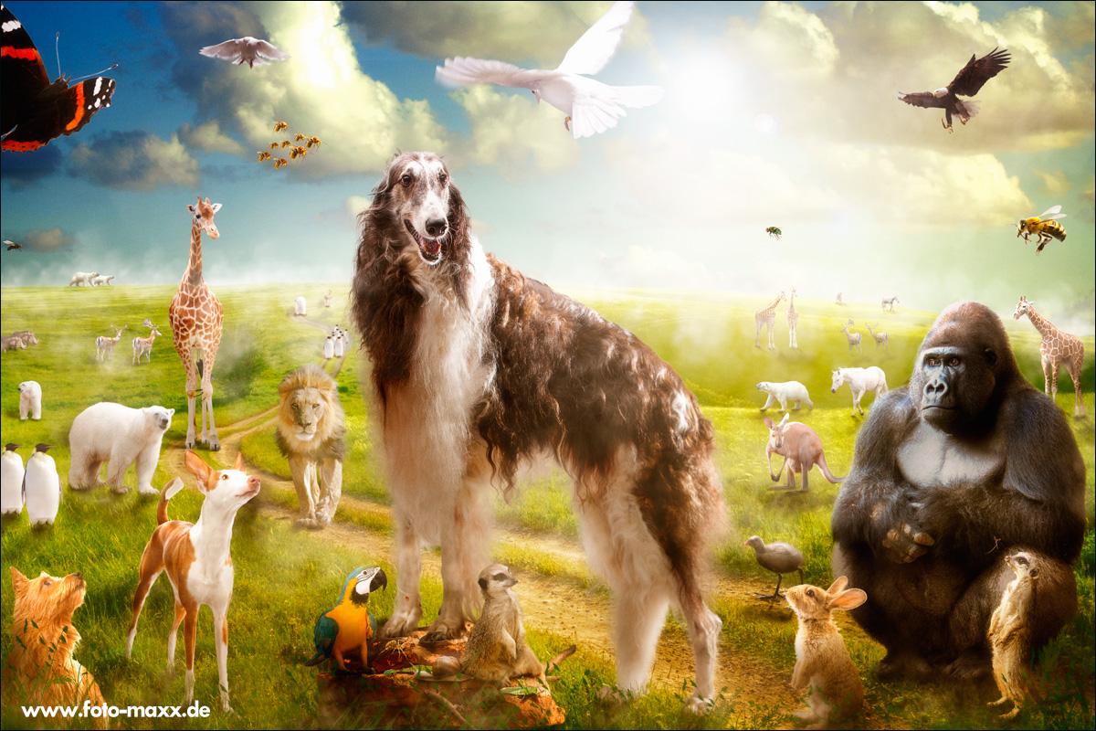 Fotocomposing für Hundezeitschrift