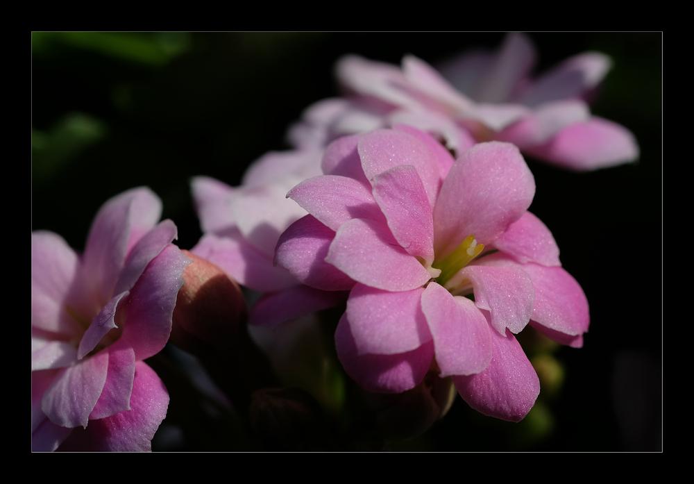 Fotofrühling im Blumenfenster