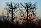 Fotografenfreundlicher Baumschnitt