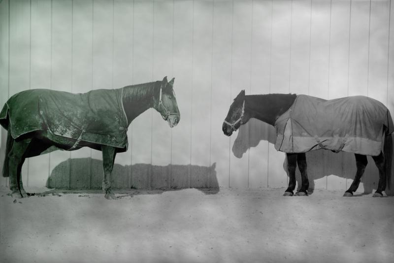 fotografie mit 2 pferden