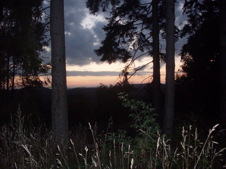 Fotografie.: Waldfenster am Abend 001