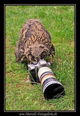 Fotografierender Uhu