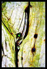 Fotokunst - Christine von Wiegen - Lichtgemälde - Holz und Co. 14