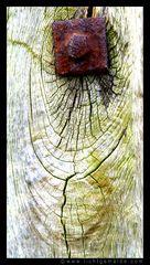 Fotokunst - Christine von Wiegen - Lichtgemälde - Holz und Co. 16