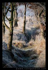 Fotokunst - Christine von Wiegen - Lichtgemälde - Landschaften 01