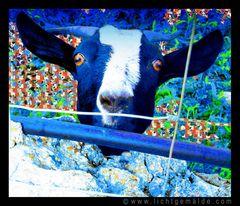 Fotokunst - Christine von Wiegen - Lichtgemälde - Tierisch 07