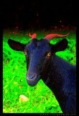 Fotokunst - Christine von Wiegen - Lichtgemälde - Tierisch 08