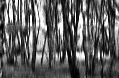 Fotokunst im Kapartenbirkenwald