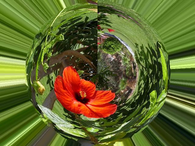 Fotomontage einer Blume.