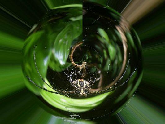 Fotomontage einer Spinne.